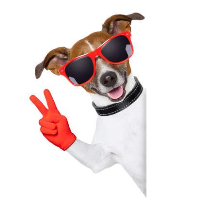 vrede vingers hond met rode handschoenen en een bril achter een lege banner Stockfoto