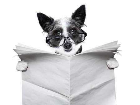 periodicos: perro lectura y la celebraci�n de un peri�dico en blanco Foto de archivo