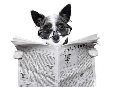 개는 빈 신문을 읽고 들고 스톡 콘텐츠