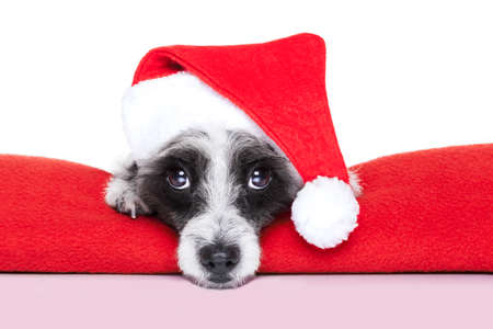 christmas dog on a red blanket with santa hat