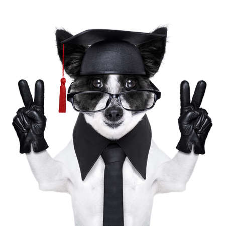 graduate dog with peace fingers and happy Stock Photo - 23482965