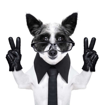peace  fingers dog with black gloves and glasses photo
