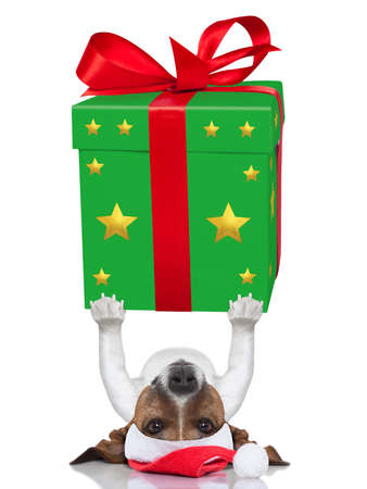 christmas dog lifting a very big and bold present photo