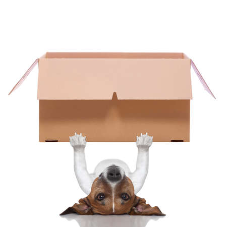 dog lifting a very big moving box photo