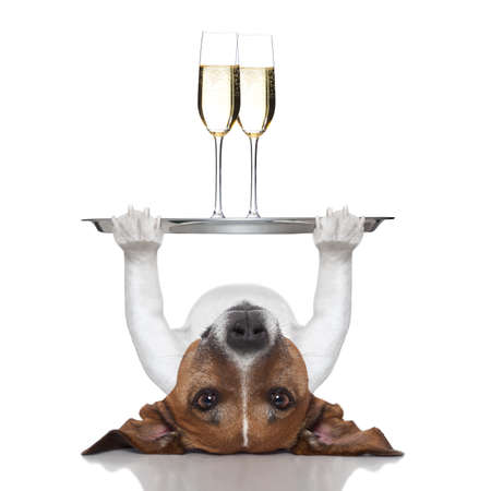 dog lifting a service tray with two glasses of  champagne Stock Photo