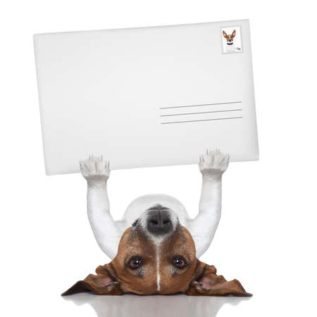 mail dog lifting a big and blank envelope photo