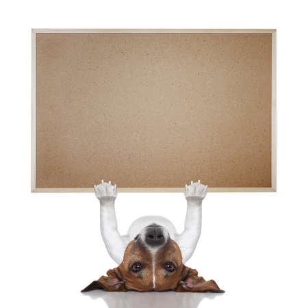 jack russel terrier lifting a big placard photo