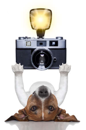 holiday pets: photographer dog taking a picture with a camera and flashing Stock Photo