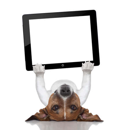 dog holding a tablet pc lying upside down photo