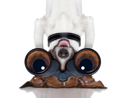 거꾸로 관찰 코가 개를 쌍안경