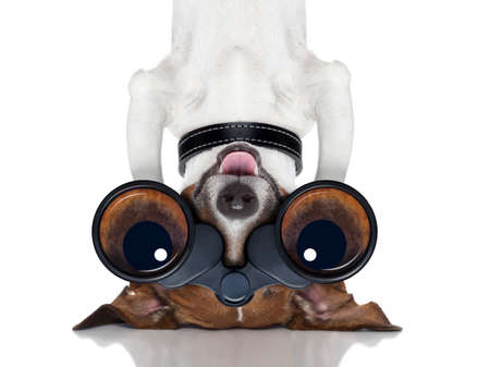magnifying glass: binoculars nosy dog observing upside down