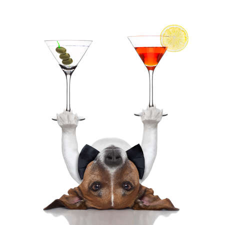 cocktail dog balancing two fancy martinis with paws
