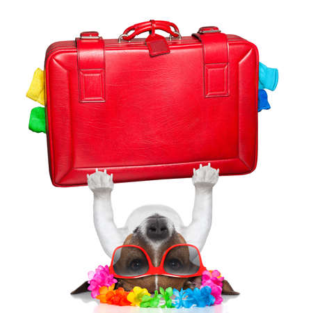 holiday dog lifting a big red suitcase for holidays Stock Photo - 23909435