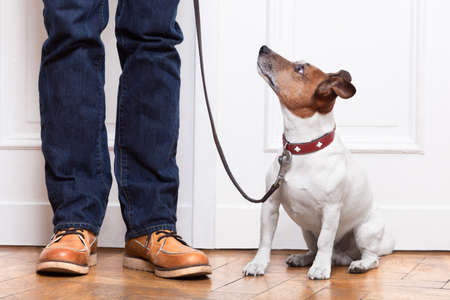 training shoes: dog looking up to owner waiting to go walkies