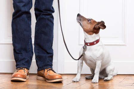 obedience: perro mirando al propietario que espera para ir walkies