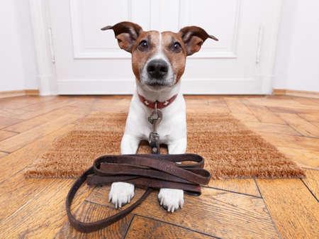 utbildning: hund med läder koppel väntar på att gå walkies