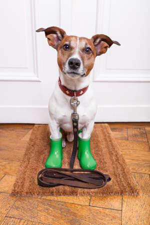 obedience: perro con goma botas de lluvia verdes a la espera de ir walkies bajo la lluvia y el frío