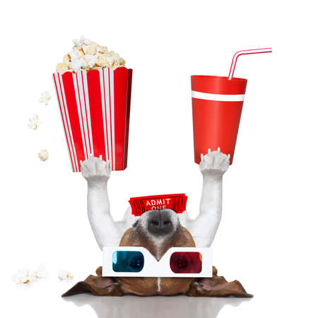 funny movies: movie dog up side down holding popcorn and drink Stock Photo