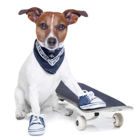 mode: een hond met skateboard dragen blauwe sneakers