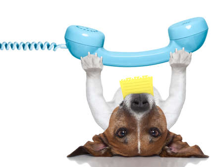 ear phones: dog holding a telephone and a note lying upside down
