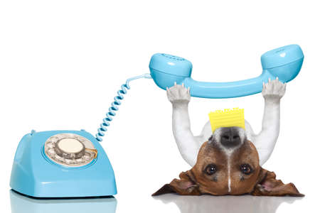 dog holding a telephone and a note lying upside down