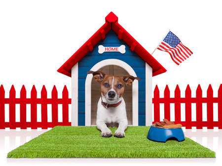 dog food: dog in  house with american flag and bowl full of food