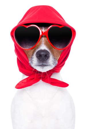 Diva Hund mit roten Sonnenbrille cool suchen