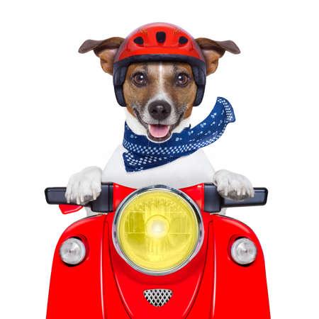 vespa: perro de la motocicleta conduciendo una moto con casco a alta velocidad Foto de archivo