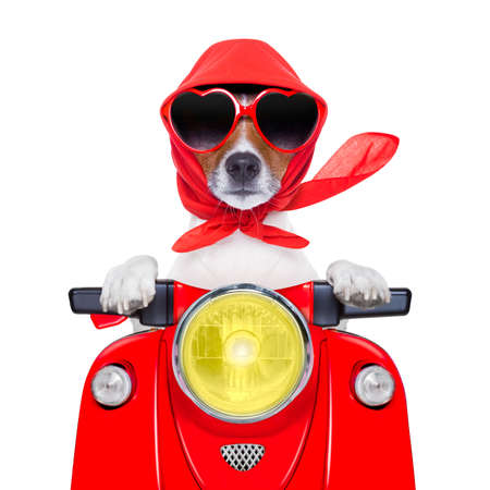 moped: motorcycle dog summer dog driving a motorbike with sunglasses Stock Photo