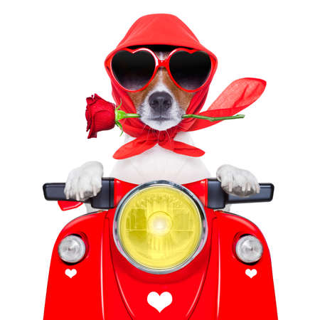 casco de moto: perro de la motocicleta conduciendo una moto con casco a alta velocidad Foto de archivo