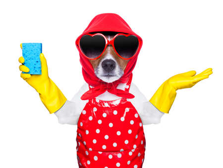 housewife dog with rubber gloves and a blue sponge photo