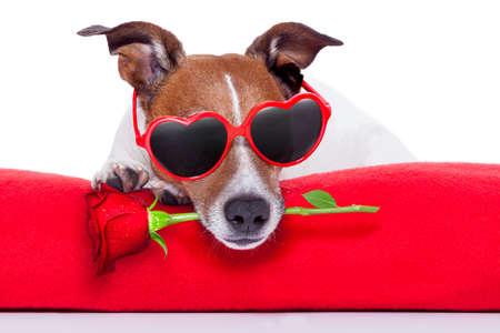 バレンタインの日の犬の口の中にバラを保持