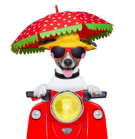 summer: cão verão cão motocicleta dirigindo uma moto com guarda-chuva