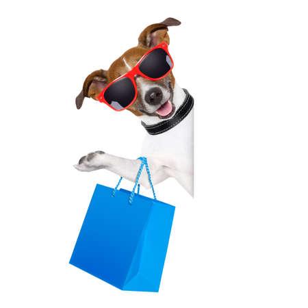 mujer con perro: perro de compras con una bolsa azul con gafas de sol Foto de archivo