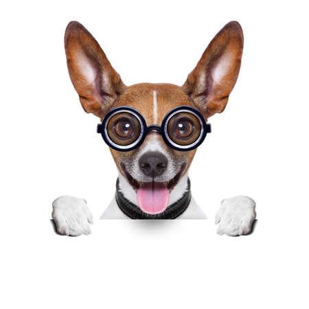 loco: perro tonto loco con los vidrios divertidos detrás de cartel en blanco
