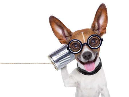 cara sorprendida: perro feo estúpido en el teléfono con una lata Foto de archivo
