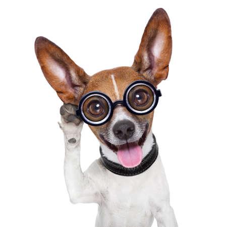 big ear: silly dog listening careful with one very big ear Stock Photo
