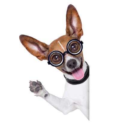 crazy silly dog with funny glasses behind blank placard photo