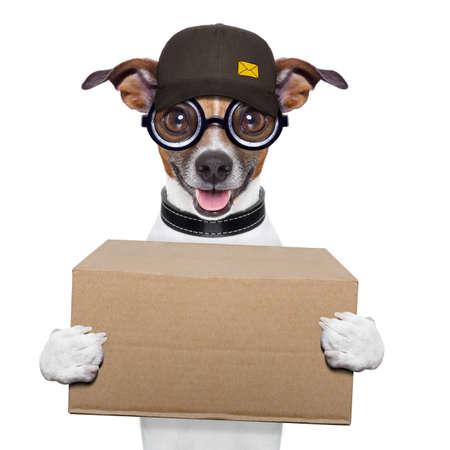 outerwear: cane postale offrendo un grande pacchetto marrone