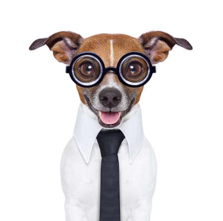 domme zakelijke hond met grappige bril en pak Stockfoto