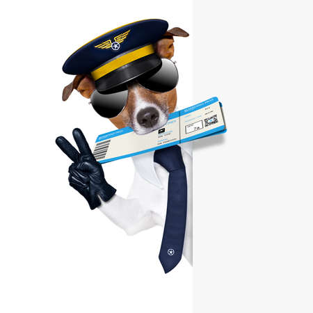 check in pilot dog with boarding pass beside a white placard photo
