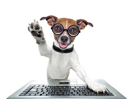 počítač: hloupý počítač pes high five s tlapou