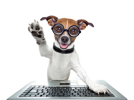 browsing: silly computer dog high five with paw Stock Photo