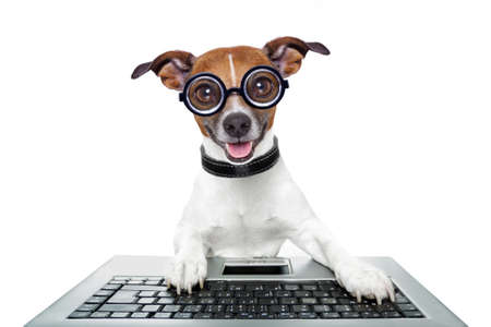 silly computer dog looking directly Stock Photo