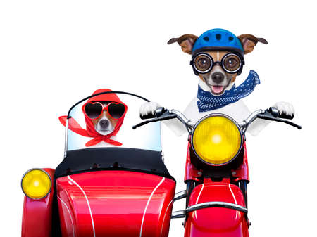 motorbike dogs together in love having a hiloday trip Reklamní fotografie