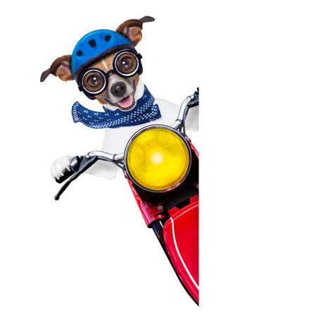 Glass: perro moto al lado de una bandera blanca en blanco Foto de archivo