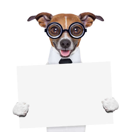 funny boss dog holding a blank banner Stock Photo