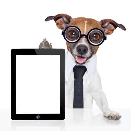 verrückte Geschäfts Hund mit einer Krawatte und Brille Standard-Bild
