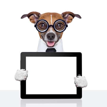 cão de negócios louco com uma gravata e óculos