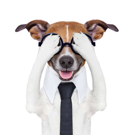frightened: hiding covering crazy dog with tie and dumb glasses
